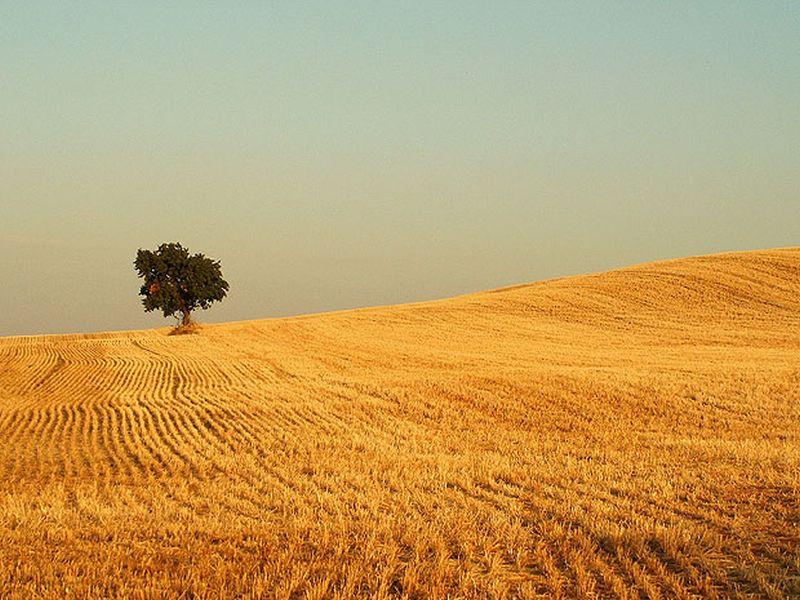 Un arbol en medio de hierba seca